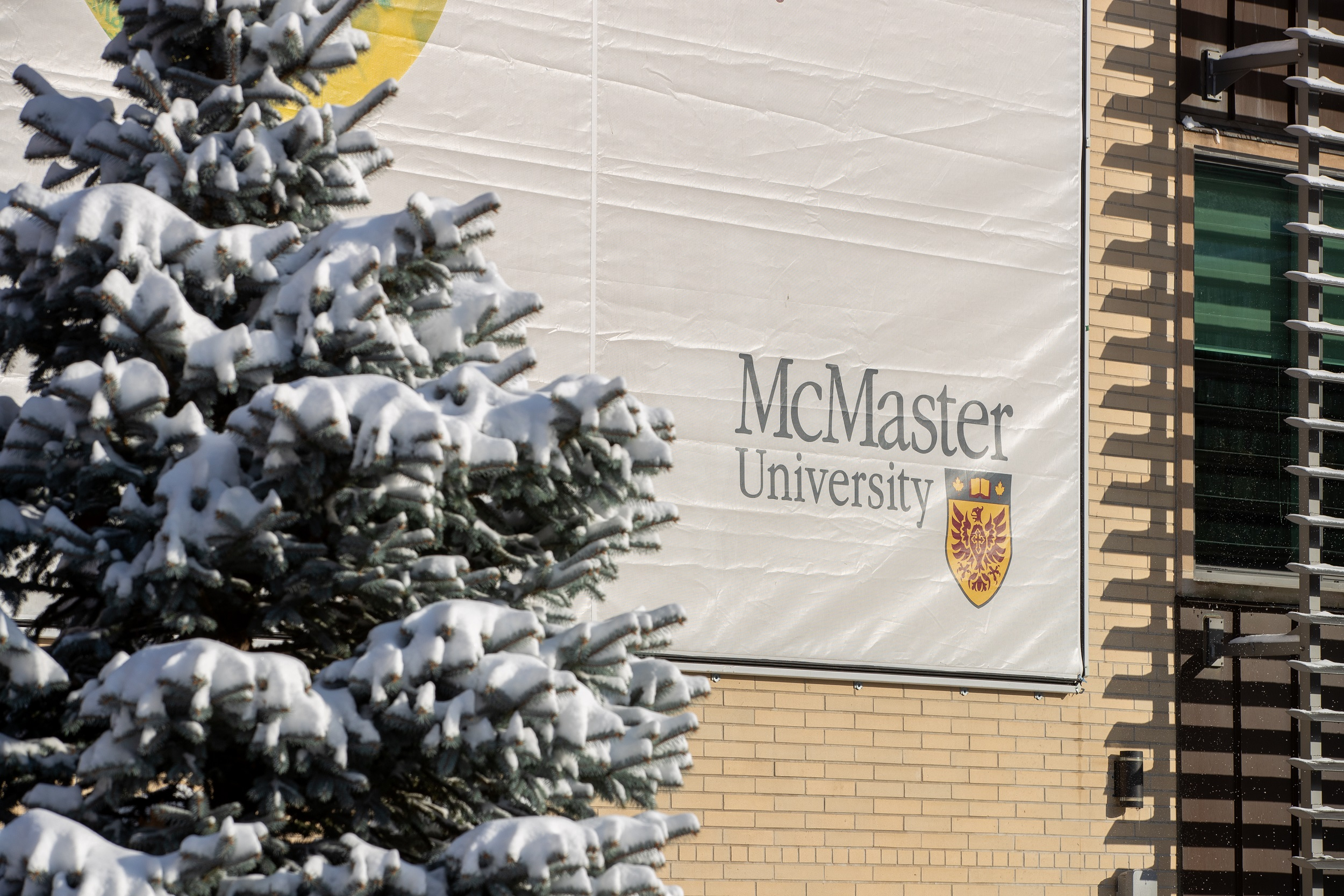McMaster logo on building with an evergreen tree with snow on it's branch
